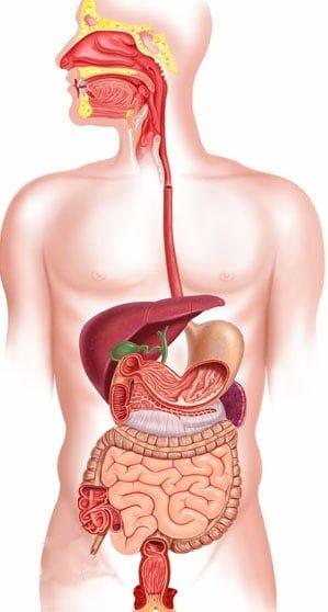 Morbus Crohn Darmentzündung