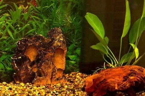 Unser Aquarium im Patientenraum