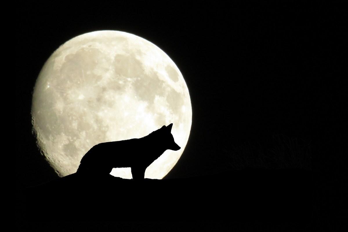 Torfestival bei den Wölfen