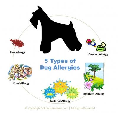 Image Result For Allergic Pet Com