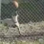Hund ballanciert mit Ball