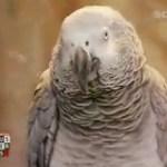 Der Party-Papagei