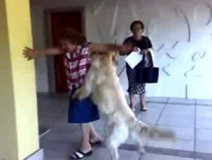 poppenderhund_wwwschneeseicherch