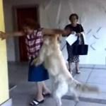 Läufiger Hund