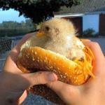 Wer mag einen Mc Chicken?