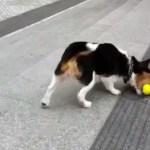 Hund spielt mit sich selbst