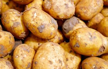 Niedernauer Kartoffeln