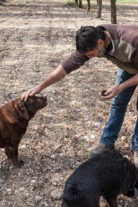 labrador-trueffelhund-streicheln