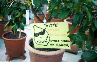 Zitrusgarten – Faak am See