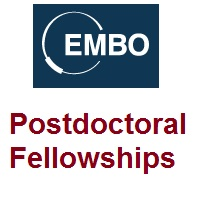 The EMBO Postdoctoral Fellowships