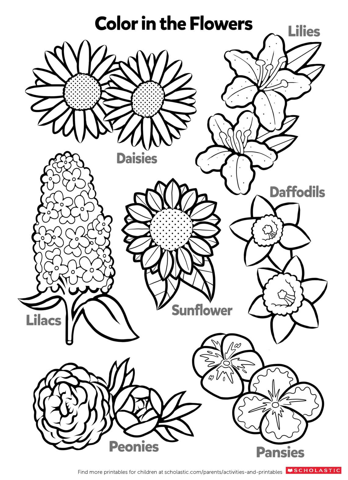 Learn About Flowers By Coloring | Worksheets & Printables ... | colouring worksheets for preschoolers