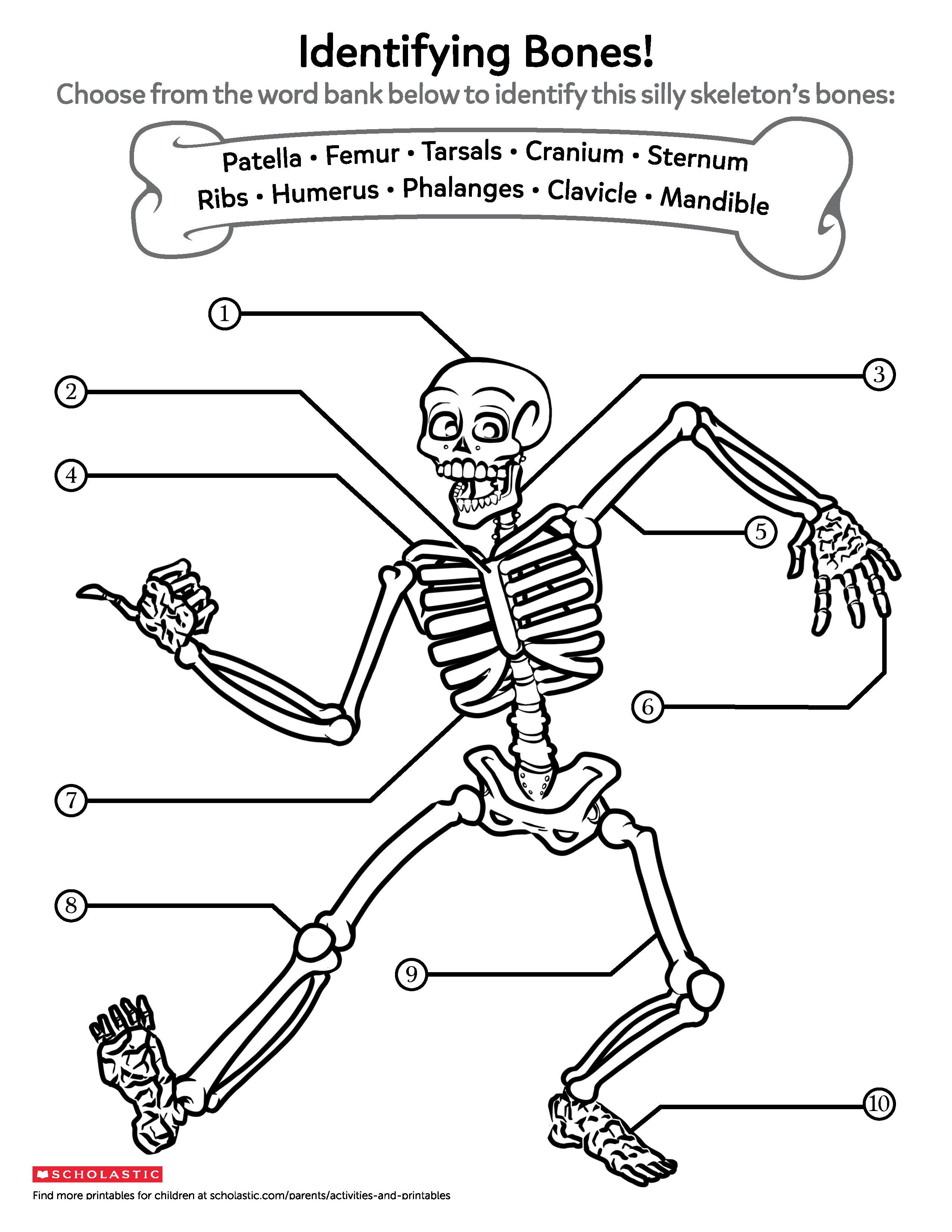 Skeletal System Fun Worksheet