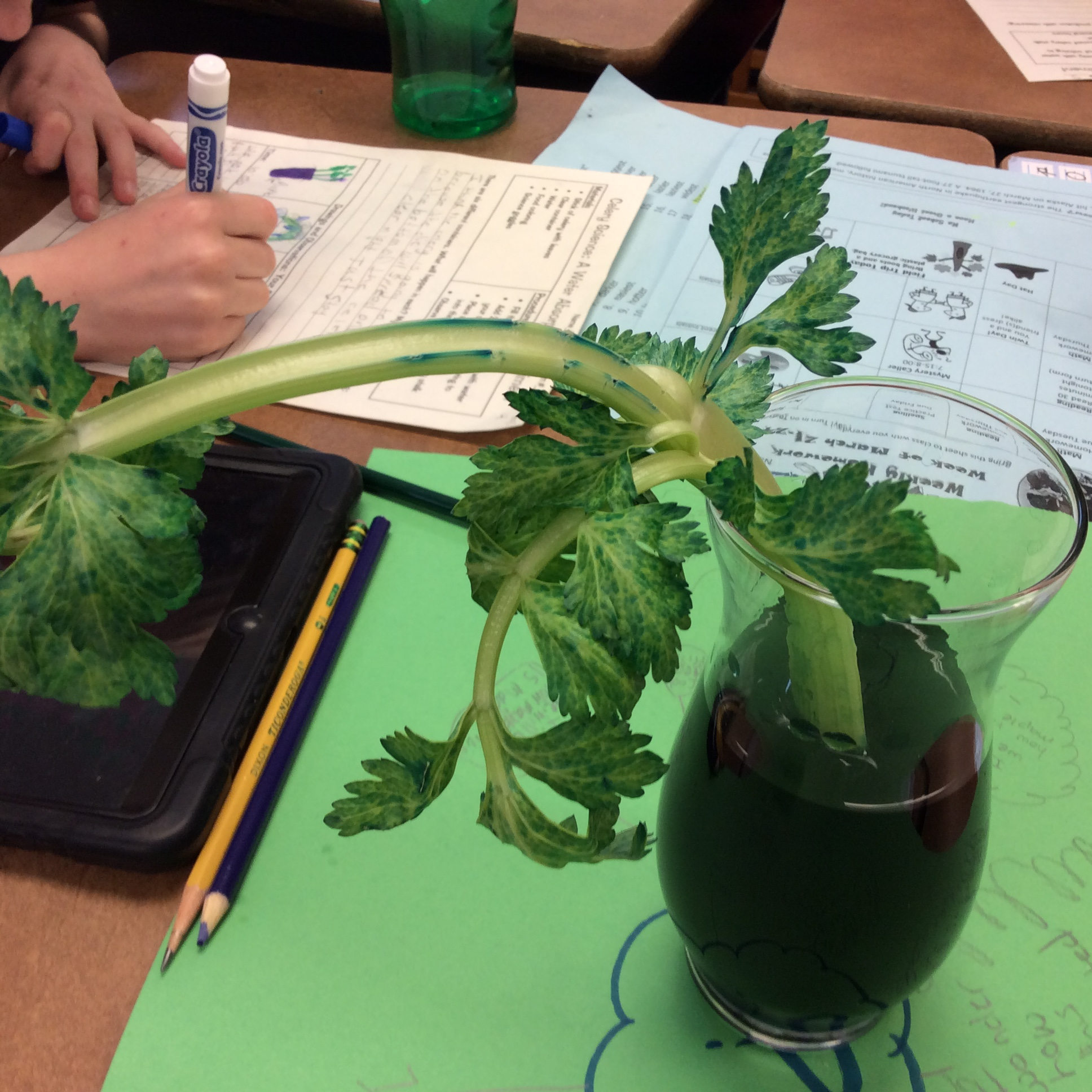 Celery Science Kids Design Their Own Experiments