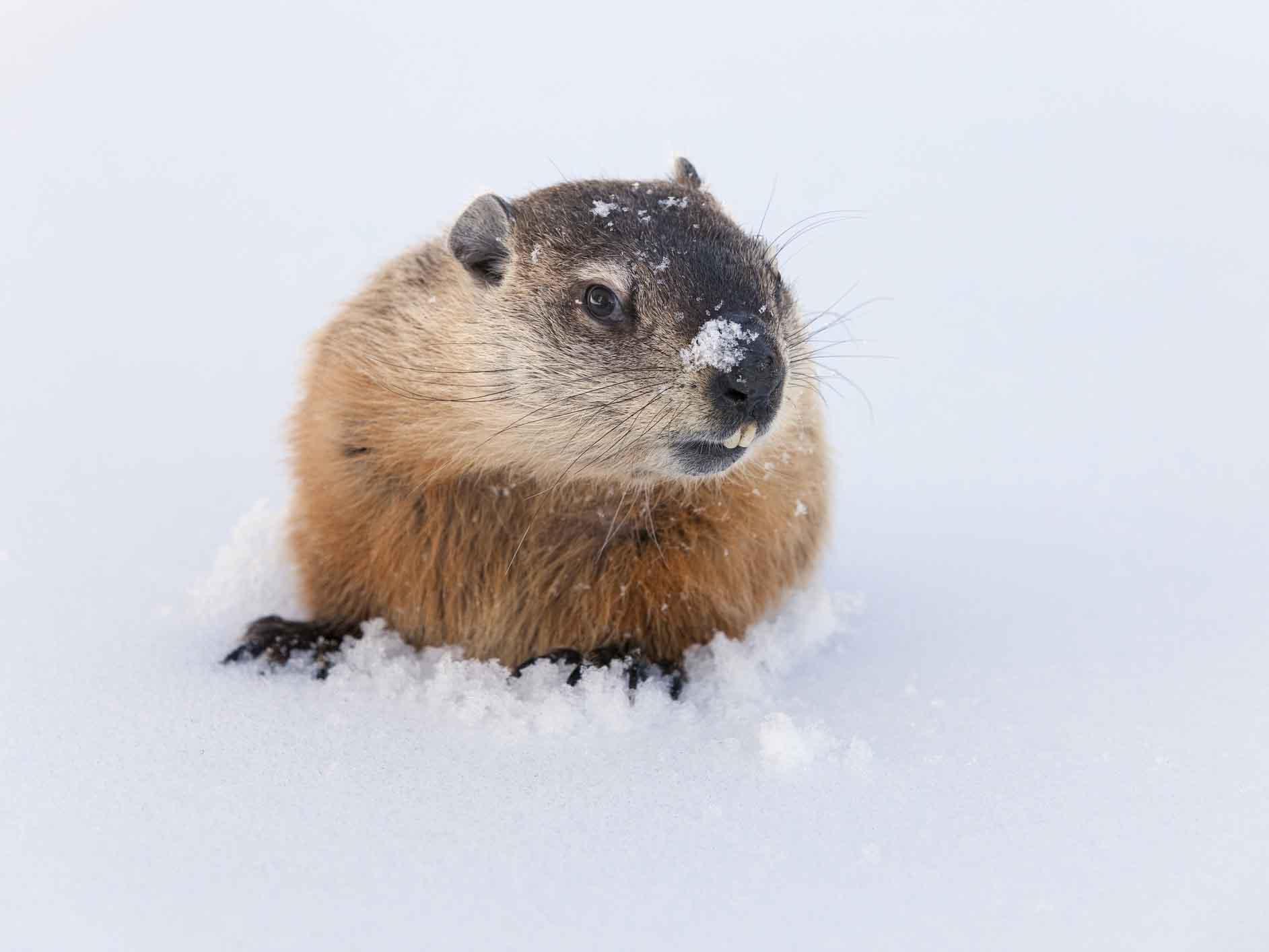 Groundhog Day 15 Fun Teaching Resources