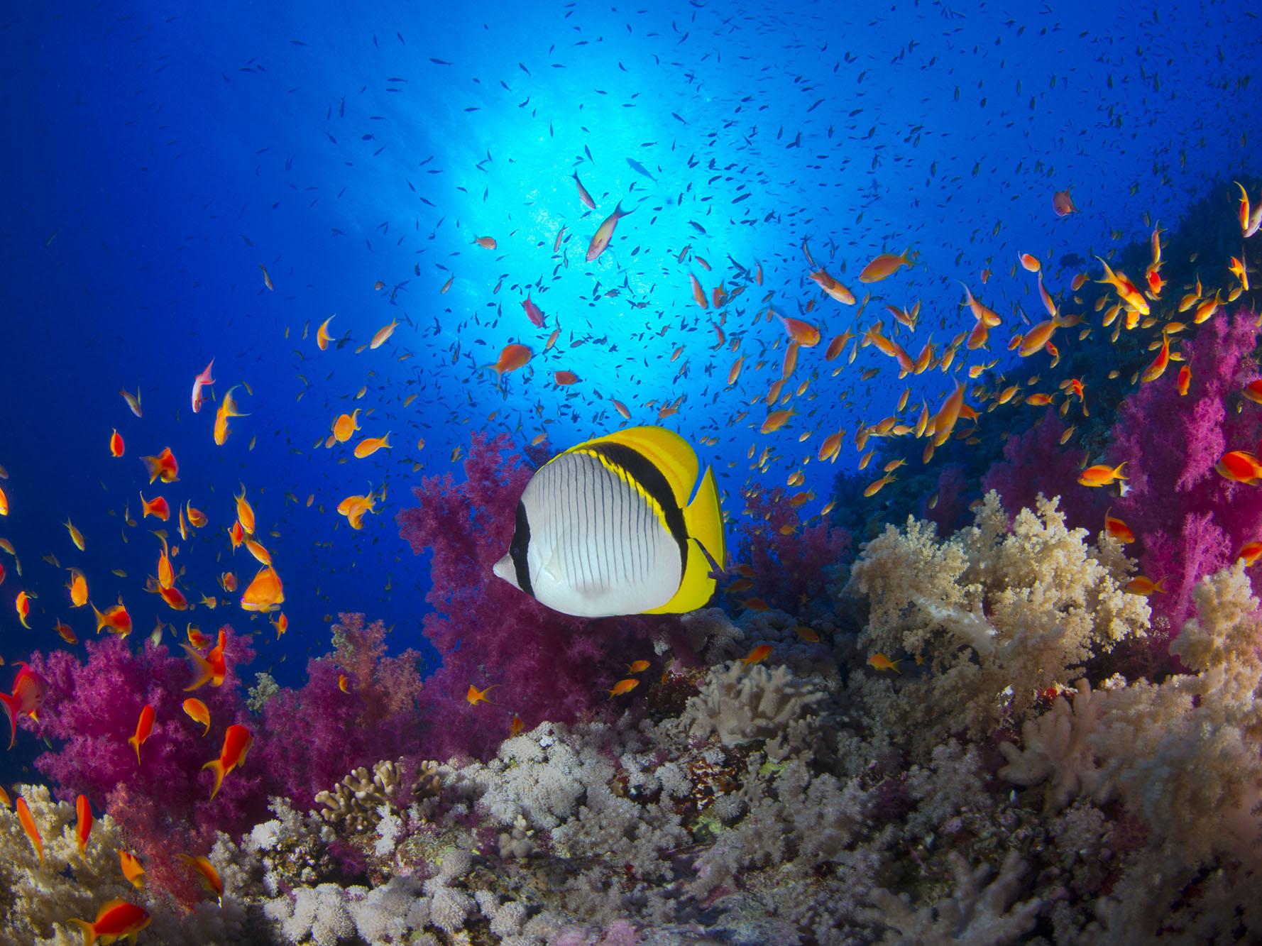 Ocean Life Teaching Guide