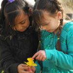 Daffodil pollination lesson- River Road ES, Eugene