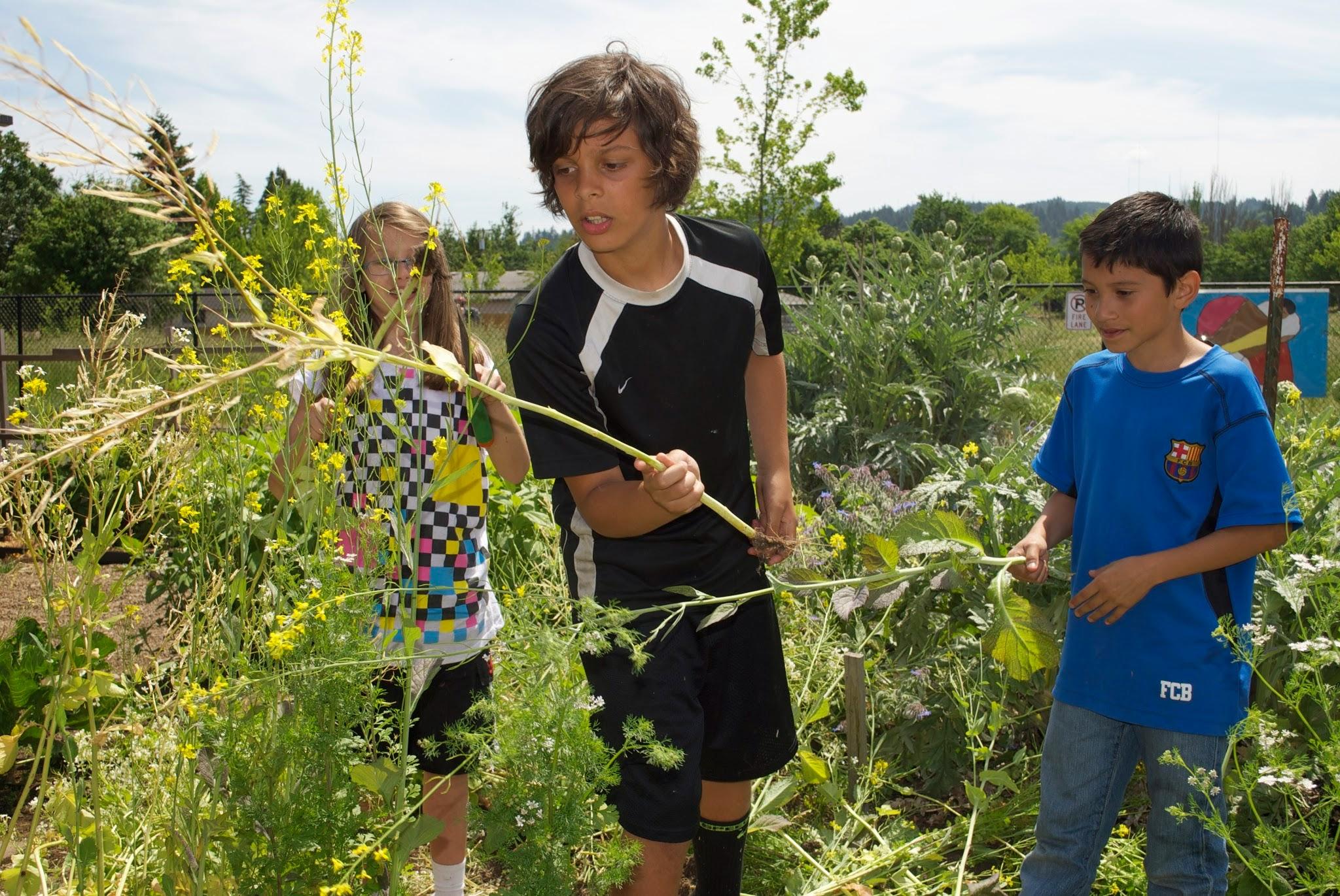 Welcome - School Garden Project of Lane County
