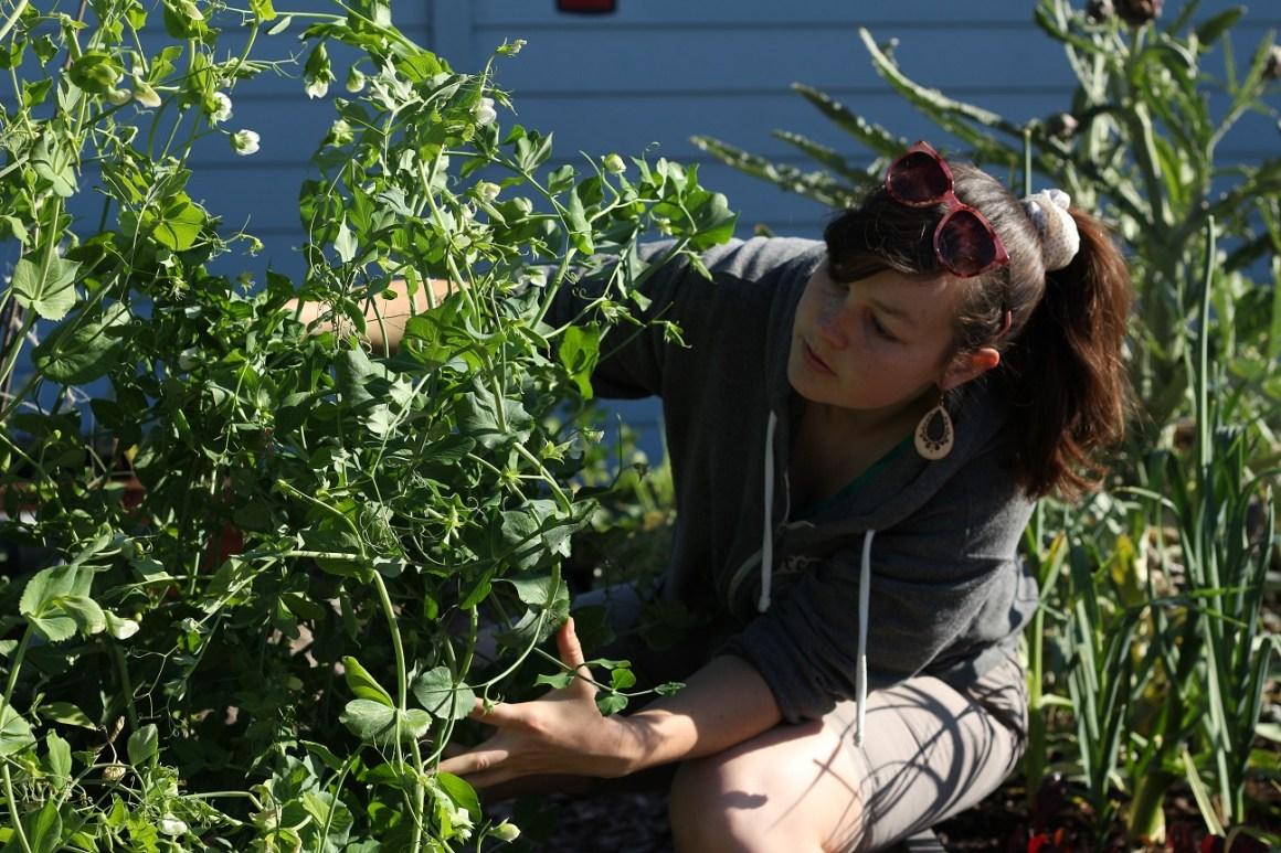 Volunteer Spotlight: Phoebe Lett