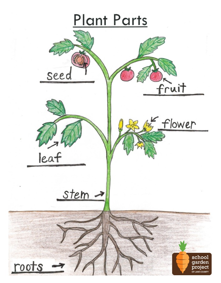 icon plant part diagram school garden project of lane county rh schoolgardenproject org plant parts diagram label plant parts diagram pdf