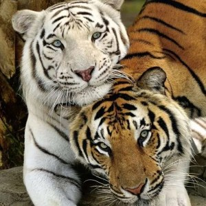 Blog | Mother of Tigers