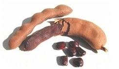 costa rica fruit tamarindo