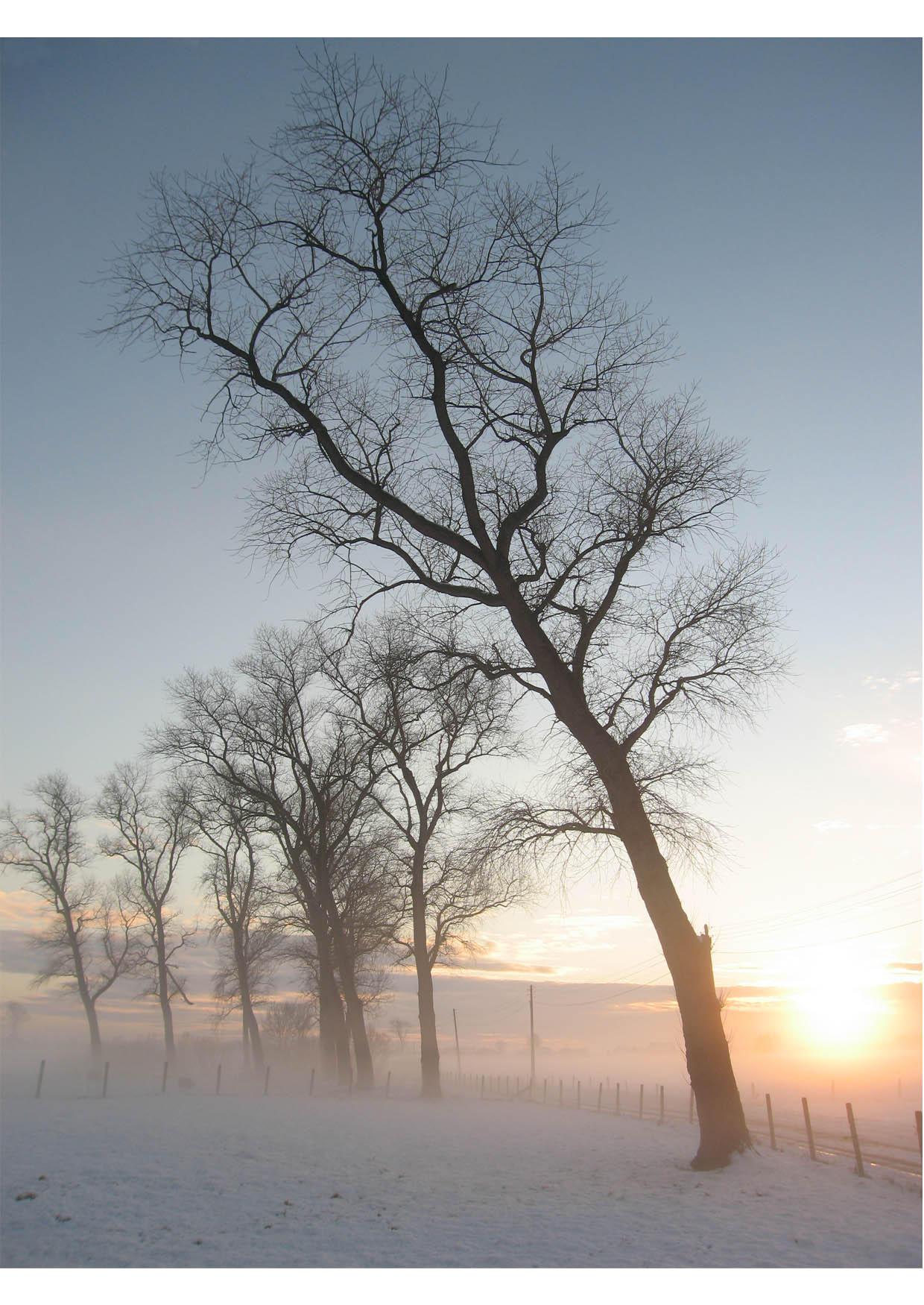 Foto Winterlandschap Gratis Foto S Om Te Printen