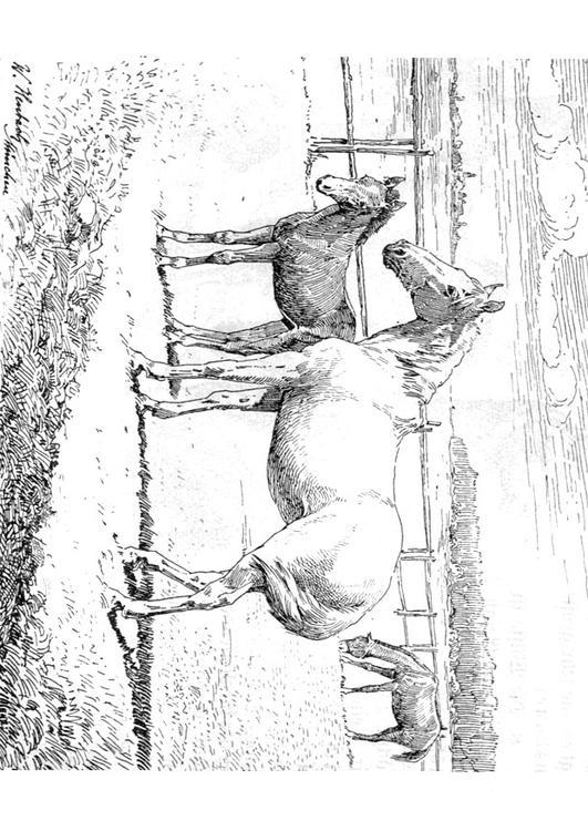 Kleurplaat Paard Met Veulen Afb 9772