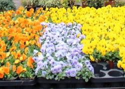 Blumen Weber Blumen1
