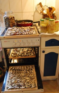 Pilze Trochnen auf Sieben, die mir mein Liebster gebaut hat. Foto: Petra Elsner