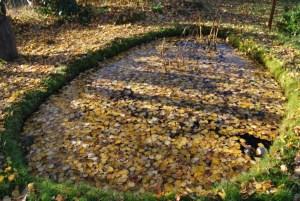 Birkenbältter im Teich - das Blätterei im Garten. Foto: Petra Elsner