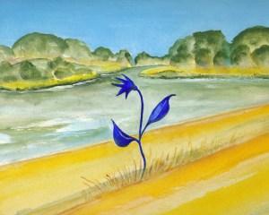 Die Wunderblume am Lieper Damm Zeichnung von Petra Elsner