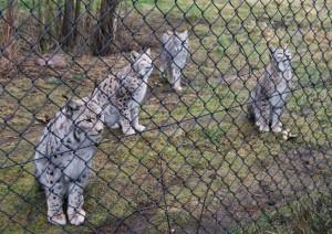 Die Lux-Familie wartet auf die Fütterung.