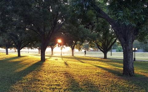 Jogger im Sonnenlicht, das durch Bäume scheint