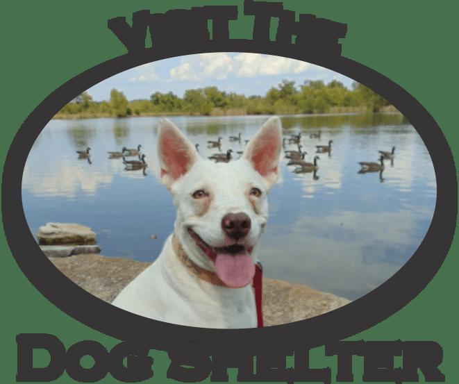 SCHS Dog SHelter