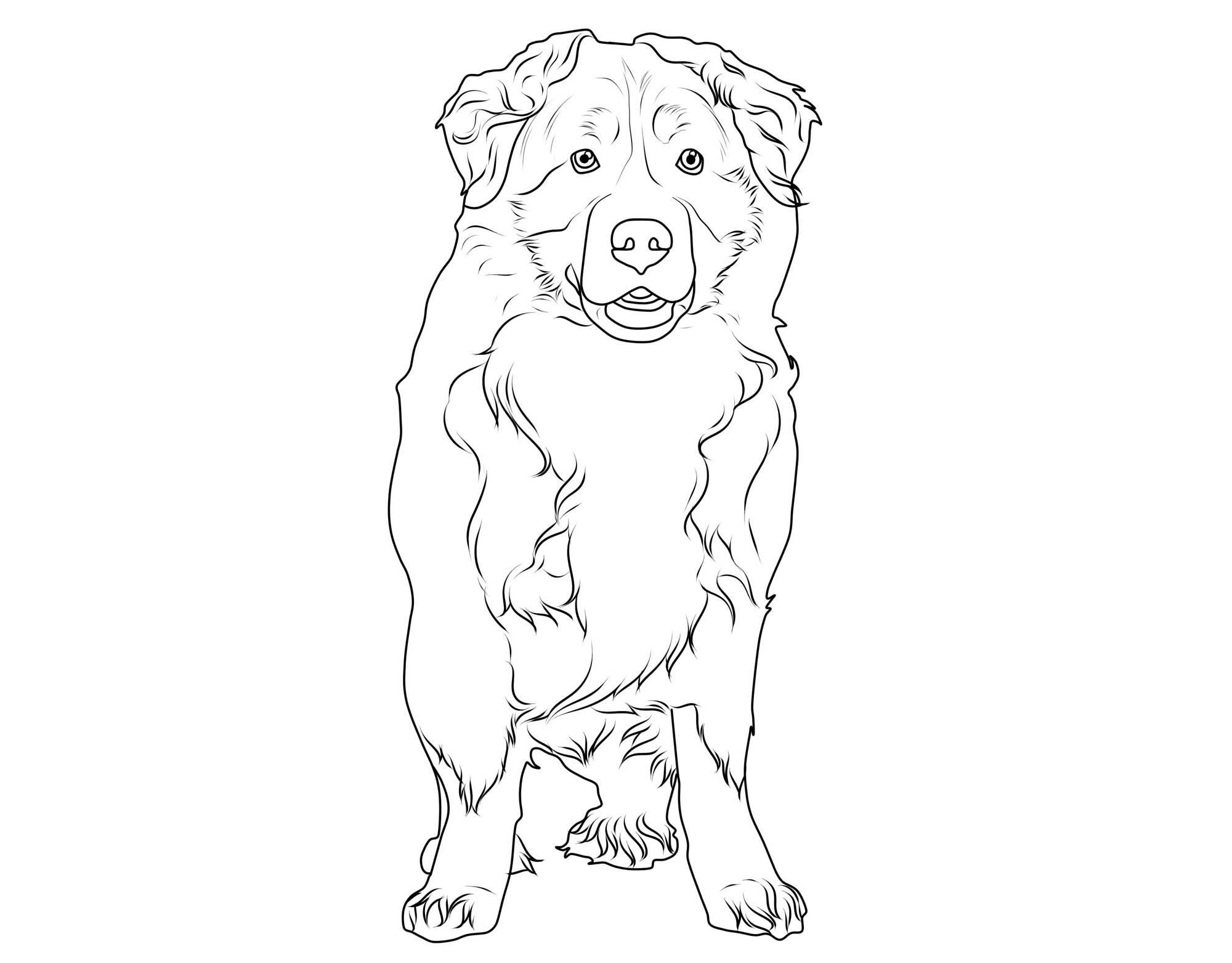 Ausmalbild Hunde Berner Sennenhund Kostenlos Ausdrucken