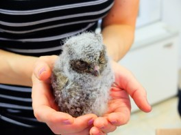 25_This year we've treated 1000 baby birds at our wildlife clinic