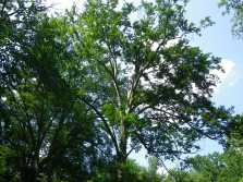 2_Our forest absorbs 10,200,000 lbs of CO2 each year
