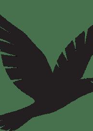 Der Schwarze Falke