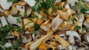 Handstraußregel auch bei Pilzen