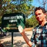Malabarpfeffer - Organic Pepper Yard