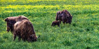 Avesta Visentpark