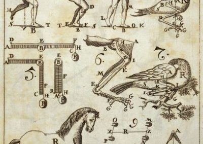 The Origins of Science as a Visual Pursuit