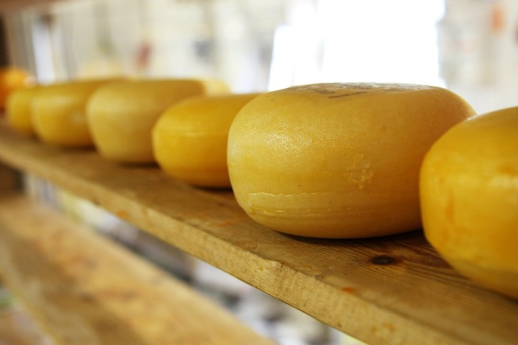 Wheels of cheese on a wooden shelf