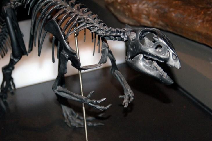 Qantasaurus skeleton