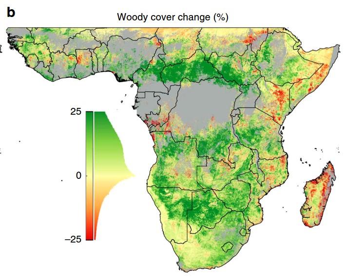 Wald-Afrika
