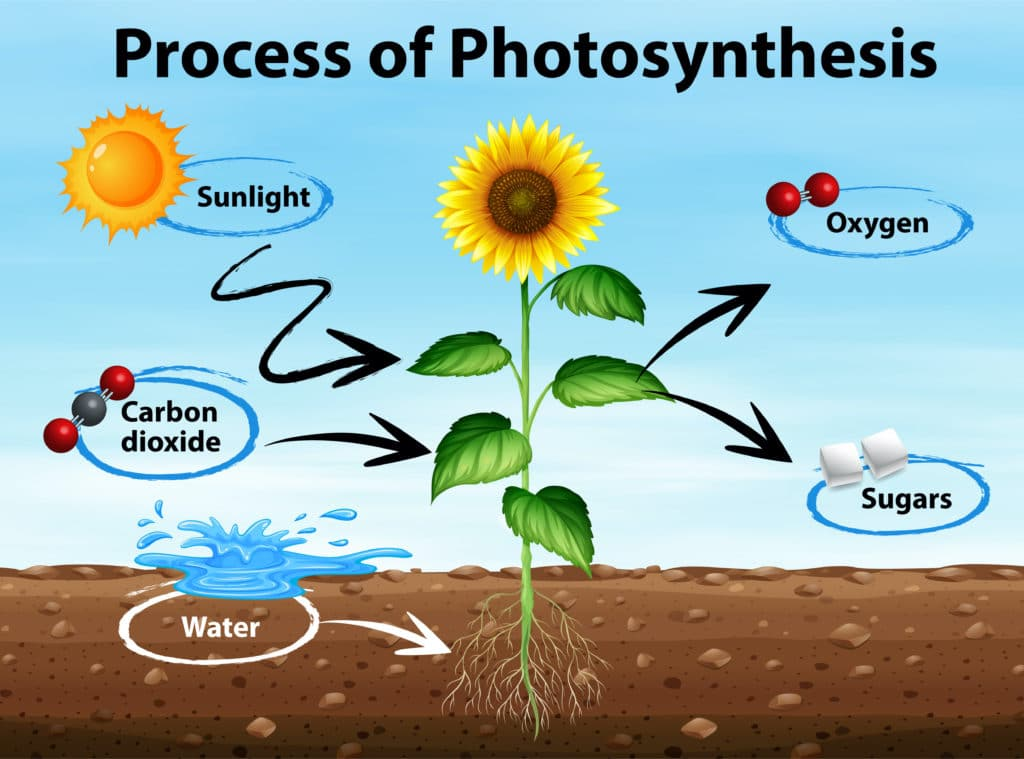 What Is Photosynthesis Science Experiments For Kids