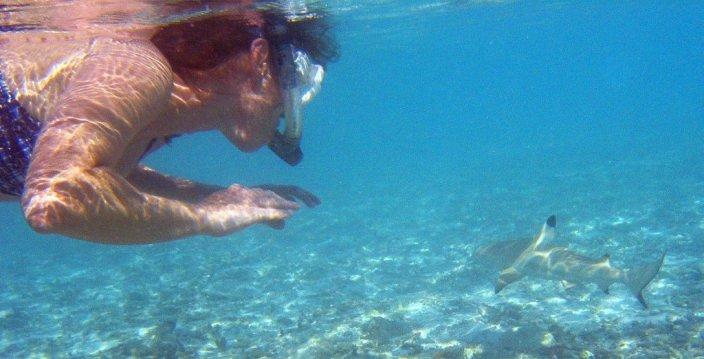 Snorkeler, pretas, recife, tubarão