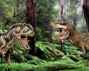 Giganotosaurus Vs T Rex Comparison Of Size Speed And Intelligence