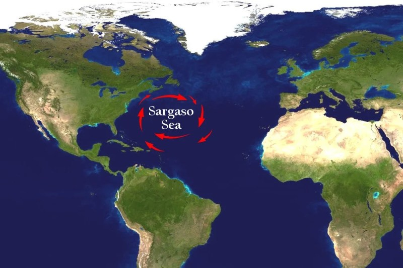 Image result for Sargasso Sea