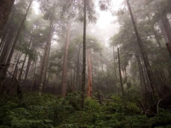 Chovendo na floresta amazônica